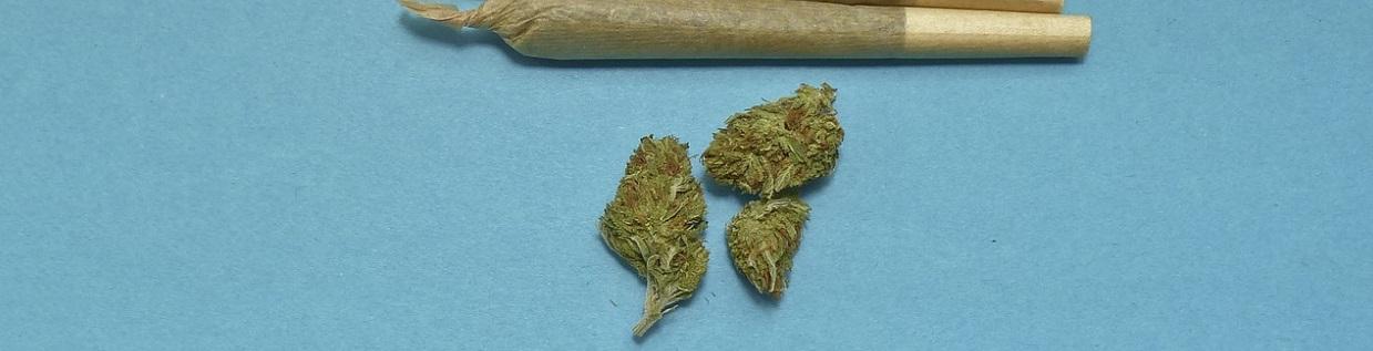 marihuana do palenia
